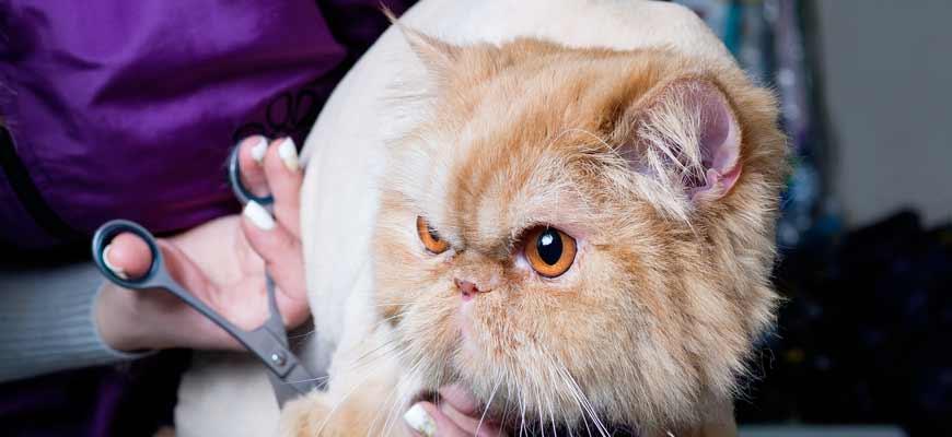 Стрижка кошки. Уход за шерстью | ЗооСалон Москва